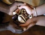 South African traditional healers become big business +256778035822